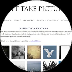 Birds.nov.2017